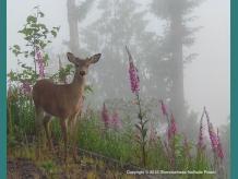 deer in fog with flowers